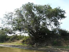 La pampa amazonienne