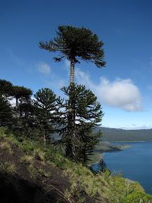 Parcs Nationaux Conguillío, Lircay et Huerquehue