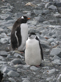 Antarctique : Au revoir nos amis les manchots