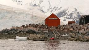 "Antarctique : ""J'ai faim Maman!"""