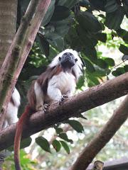 Zoo de Singapour : le plus beau au monde