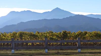 Tournée des vignobles du Marlborough