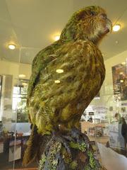 Les oiseaux néo-zélandais